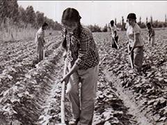 广西农垦国有东方农场发展纪实
